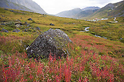 Red fireweed and green tundra vegetation above the Independence Mine State Historical Park, Matanuska Valley, Talkeetna Mountains, Alaska.