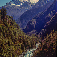 Forests in the Manang Valley, north of Annapurna in Nepal.
