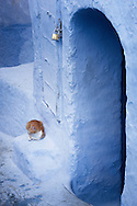 Cat relaxing in the medina of Chefchaouen, Morocco.
