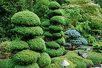 Butchart Gardens, National Historic Site of Canada,  Brentwood Bay, Vancouver Island, Canada, 200809091194, flowers, shrubs, sculpted trees, exotic shapes, Japansese Garden, topiary<br />