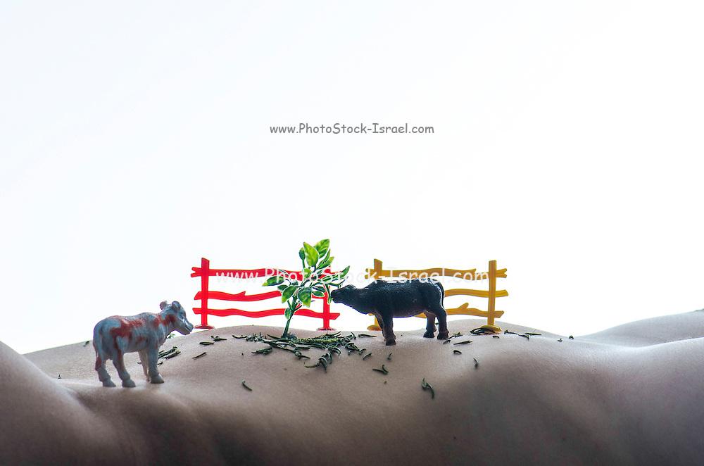 livestock farming Fantasy miniature toy cows on a nude woman's torso landscape