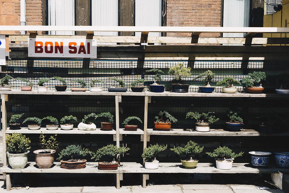 http://Duncan.co/bonsai