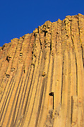 Evening light on columnar basalt detail, Devil's Tower, Devil's Tower National Monument, Wyoming