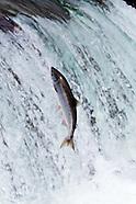 Wildlife - Fish