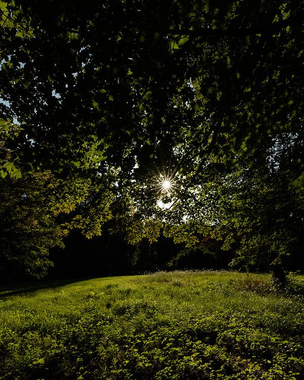 Afternoon sunlight illuminating an open meadow within Minuteman National Park.
