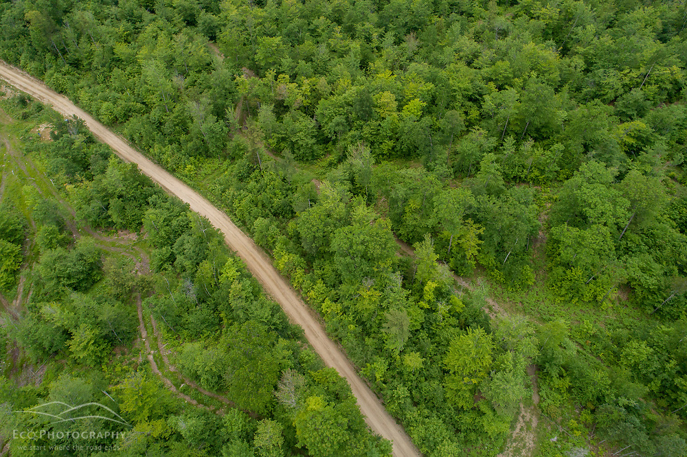 A logging road winds through the forest in Maine's Northern Forest in Bethel, Maine.