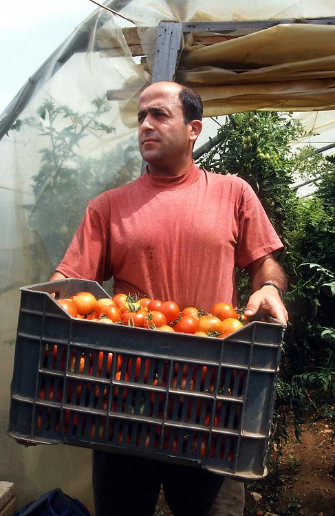 Owner, tomato farm. Beirut, Lebanon