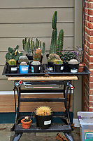 Cactus Moved Outside for Spring, Summer, and Fall Image taken with a Fuji X-H1 camera and 60 mm f/2.4 macro lens