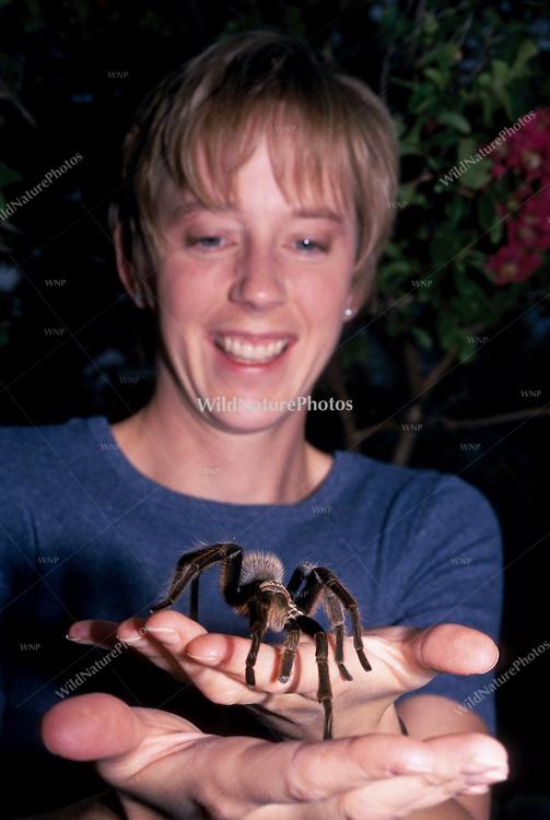Woman holding Arizona Blond Tarantula, Aphonopelma chalcodes; Sonoran Desert, Arizona (MR)