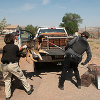 Navajo Nation animal control officers Connie Kady, left, Ginger Yoe, center, and Vincent Tsosie wrestle an owner surrendered dog into a metal cage in the back of a truck as part of a dog sweep in Sundance Tuesday, June 15.