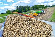 Nederland, Kekerdom, 10-8-2016Aardappeloogst in de Ooijpolder. Oogst van de vroege soort Sinora .  Nadat de aardappels uit de grond zijn gehaald lost de trekker ze in een schudmachine die de klei er een beetje afhaald. Groter kleibrokken worden er uit gevist waarna de piepers via de band in een vrachtwgen verdwijnen. Die brengt ze naar de fabriek waar ze verwerkt worden tot friet, frites, en chips Foto: Flip Franssen