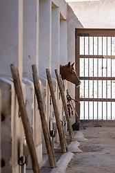 Alte Stallungen<br /> Doha - CHI Al SHAQAB 2020<br /> Araber Zucht<br /> 28. Februar 2020<br /> © www.sportfotos-lafrentz.de/Stefan Lafrentz