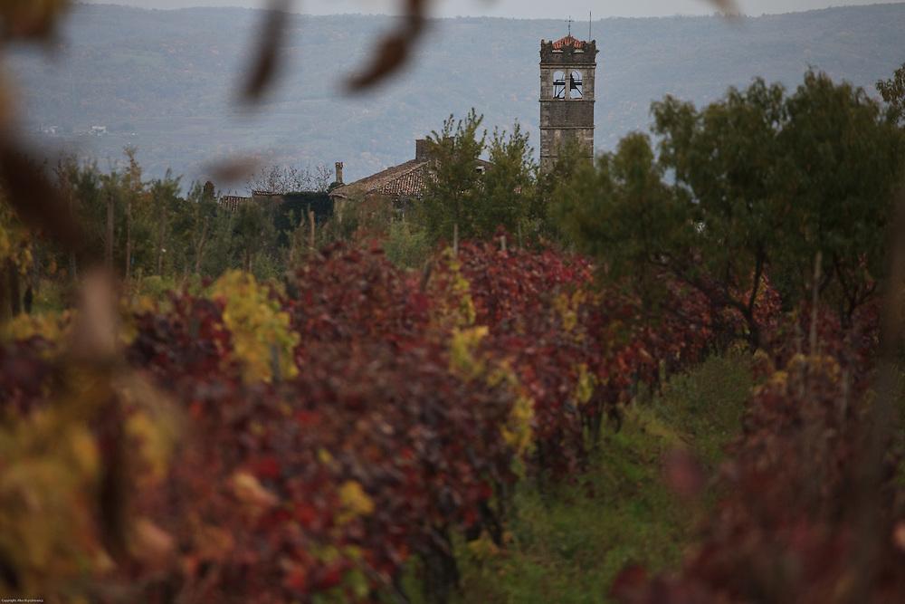 Istrian Vineyard in Croatia.