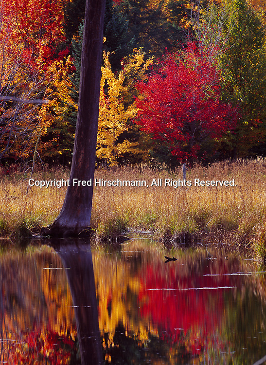 Fall colors of the northern hardwood forest reflected in beaver pond south of the Huron Mountains between Big Bay and Skanee, Upper Peninsula of Michigan.