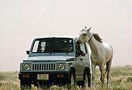 Al Amrah Bedu man with his Arabian horse