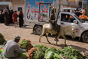 A local man rides a donkey through the weekly market at Qurna, a village on the West Bank of Luxor, Nile Valley, Egypt.