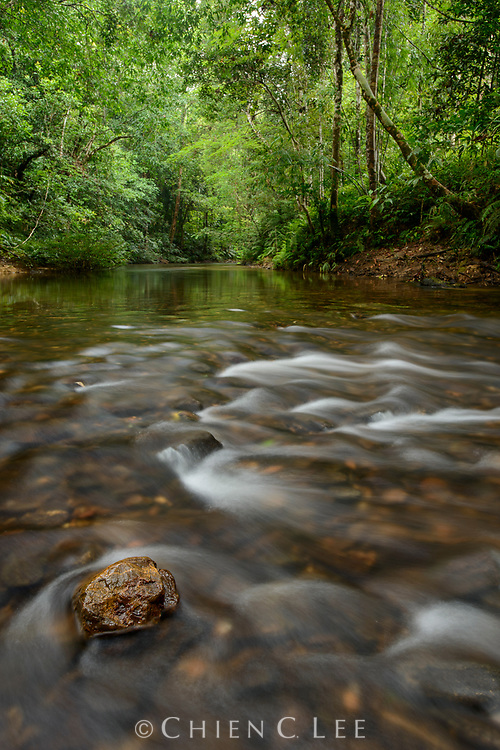 Crystal clear streams flow from undisturbed rainforest habitats in the interior of Batang Ai National Park in southern Sarawak, Malaysia (Borneo).