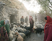Return of the herds in the evening. <br /> The traditional life of the Wakhi people, in the Wakhan corridor, amongst the Pamir mountains.