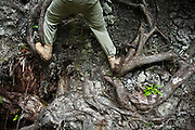 Henry climbs the roots of a fallen tree along the West Coast Trail, British Columbia, Canada.