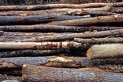 Logs After Being Stripped