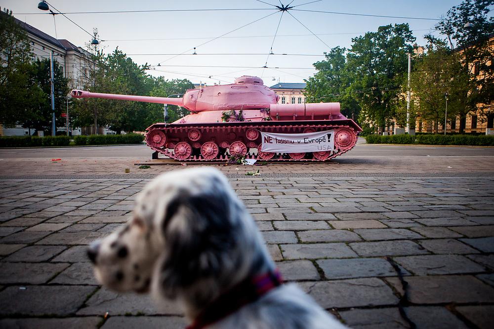 """English Setter Welpe """"Rudy"""" reist am 14.05. 2017 zum ersten Mal in eine fremde Stadt nach Brno (Brünn) in der Tschechischen Republik. Rudy sitzt vor dem """"Rosa Panzer"""" des tschechischen Künstlers David Cerny.  Rudy wurde Anfang Januar 2017 geboren und lebt seit einiger Zeit mit deiner neuen Familie."""