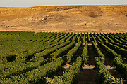 Desert Agriculture Photographed in the Negev Desert, Israel