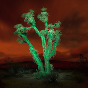 Cactus light painting in Mojave Desert on December 10, 2016 in Mojave, California.  ©2016 Michael Der/All Rights Reserved.<br />