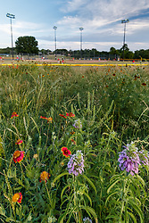 Assorted wildflowers next to baseball fields during game, White Rock Lake, Dallas,Texas, USA