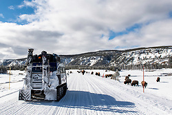 A snowcoach approaching a herd of bison in Yellowstone National Park