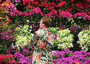 © Licensed to London News Pictures. 20/05/2013. London, UK A man is camouflaged by a colourful display of flowers. Press day at Chelsea Flower Show 2013. The centenary edition of the show attracts large number of visitors and is already sold out before opening day. Photo credit : Stephen Simpson/LNP