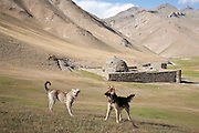 A local taigan and an alsatian dog in front of the caranavsarai monument of Tash Rabat, Kyrgyzstan.