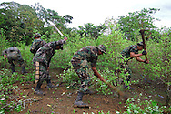 """The army that once upon a time was employed for destroy every field of coca, now is incharged to operate the voluntary auto recuction until a """"one man one cato"""" into the fields of authorized coca growers of Chapare"""