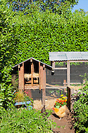 A chicken in an urban backyard in Portland, Oregon with a decorative chicken coop