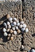 Snails, Formentera