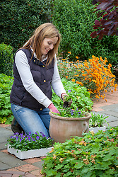 Planting up a container with spring bedding (Violas)