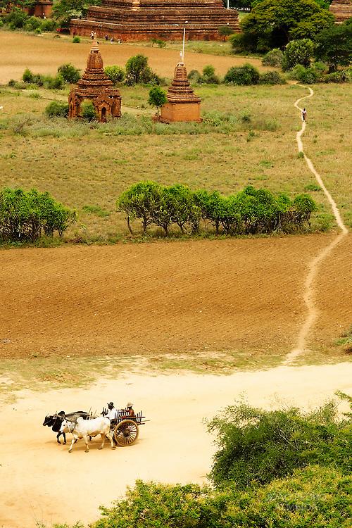 Farmer driving an ox car at Bagan