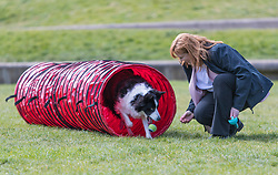 MSPs display their dogs and put them through an agility course with the winner decided by a public vote on the day.<br /> <br /> Pictured: Emma Harper with her dog Maya
