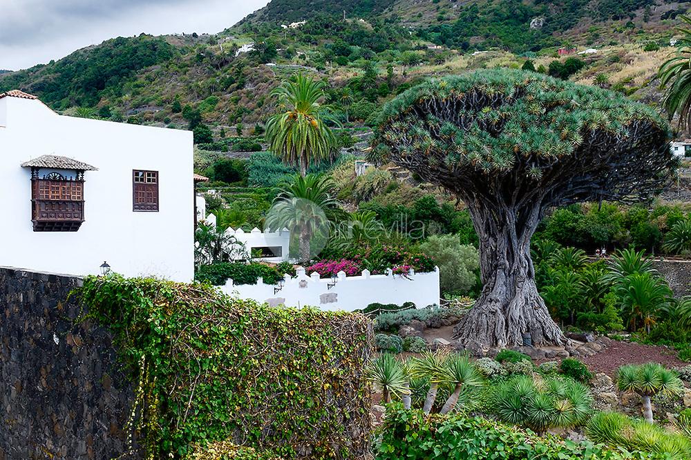 Drago, Dracaena draco,Tenerife, Teide, Canarias, España, Europa Drago ©Country Sessions / PILAR REVILLA
