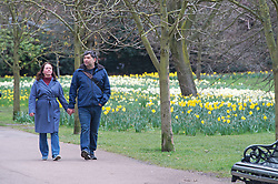 © Licensed to London News Pictures 16/03/2021. Greenwich, UK. A couple holding hands as they walk in the park. Spring Daffodils at Greenwich Park in London today as the Met Office forecast for the next few days is sunshine with some rain across the UK. Photo credit:Grant Falvey/LNP