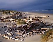 Driftwood along Pacific Ocean shore, Nehalem Bay State Park, Oregon.