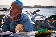 Fisherman at the Fishing Port, Essaouira, Morocco, North Africa, Africa