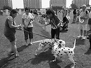 The Dalmation on the right called Sally Ann had just won ' best in show' Bexhill Horse Show, 28 May 2018
