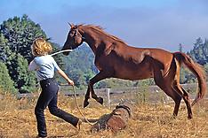 316 Horse Sense - CA