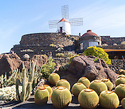 Cactus plants and windmill Jardin de Cactus designed by César Manrique, Guatiza. Lanzarote, Canary Islands, Spain. Cactaceae, Echinocactus grusonil, from San Luis de Potosi-Hidalgo, Mexico