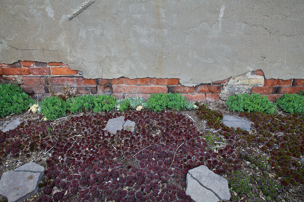 Green space created along the side of an old building in a parking lot, creates an abstract splash of colour in a typically grey space.