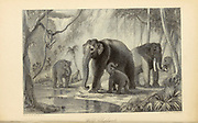 Wild Elephants From the book ' The Oriental annual, or, Scenes in India ' by the Rev. Hobart Caunter Published by Edward Bull, London 1834 engravings from drawings by William Daniell