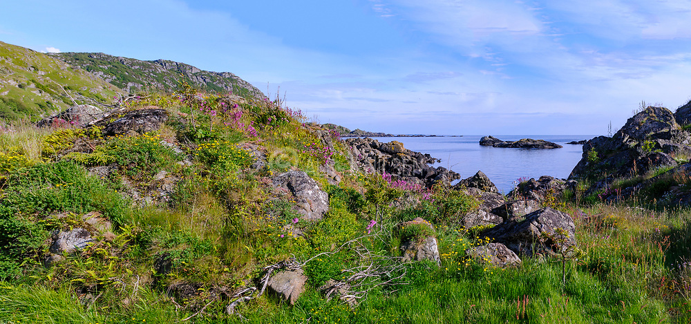 Coastline with diverse plant growth at Hidra, south-western Norway in June.