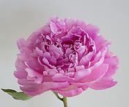 Bloom Lenticulars