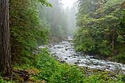The Skokomish River on a rainy summer day in Olympic National Park, Washington, USA.