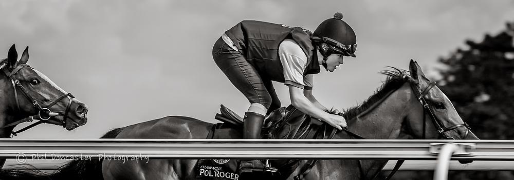 Photobombs of horse on Warren Hill Gallops Newmarket, thoroughbred training on warren hill newmarket,